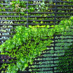 ... Living Wall DIY