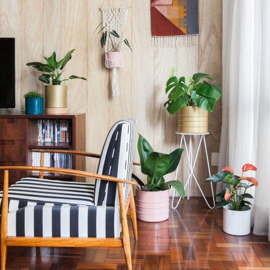 Indoor plants guide